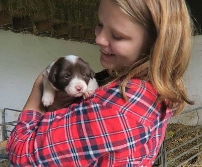 A summer school junior student with a puppy at an Irish farm during her summer stay in Dublin